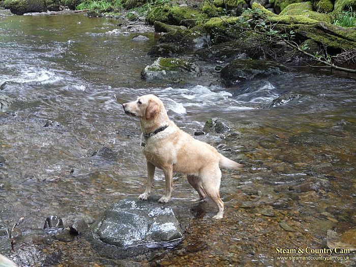 Jess in the river