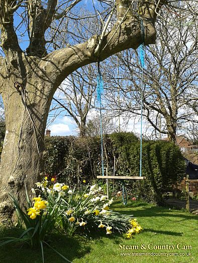 Swing in the daffs