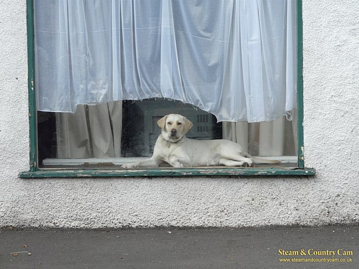 How much is that doggy in the window