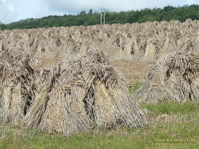 A field of stooks